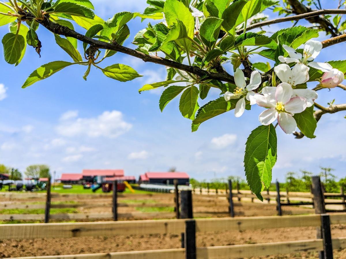 Evans-Orchard-Blossoms-medium