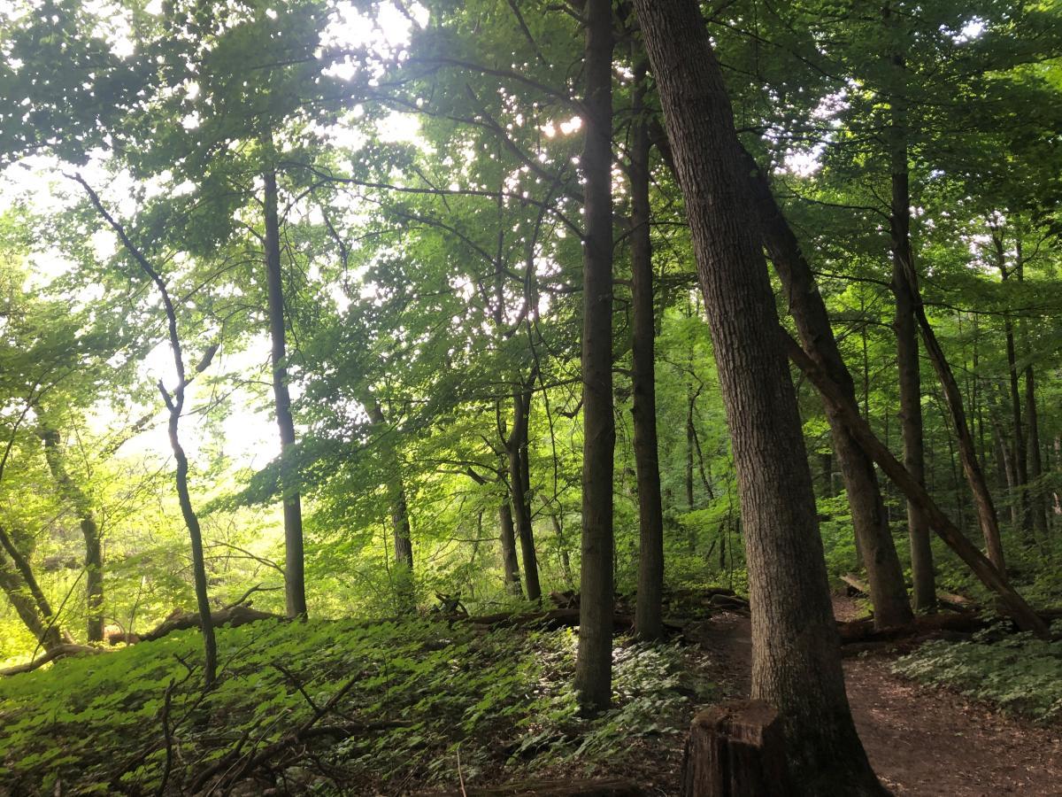 UW Arboretum Wingra Woods