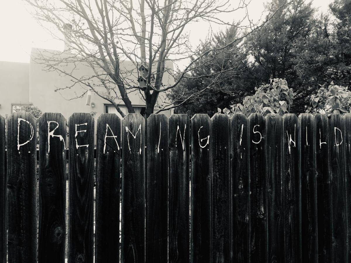 Anastasio Wrobel' Dreaming is Wild
