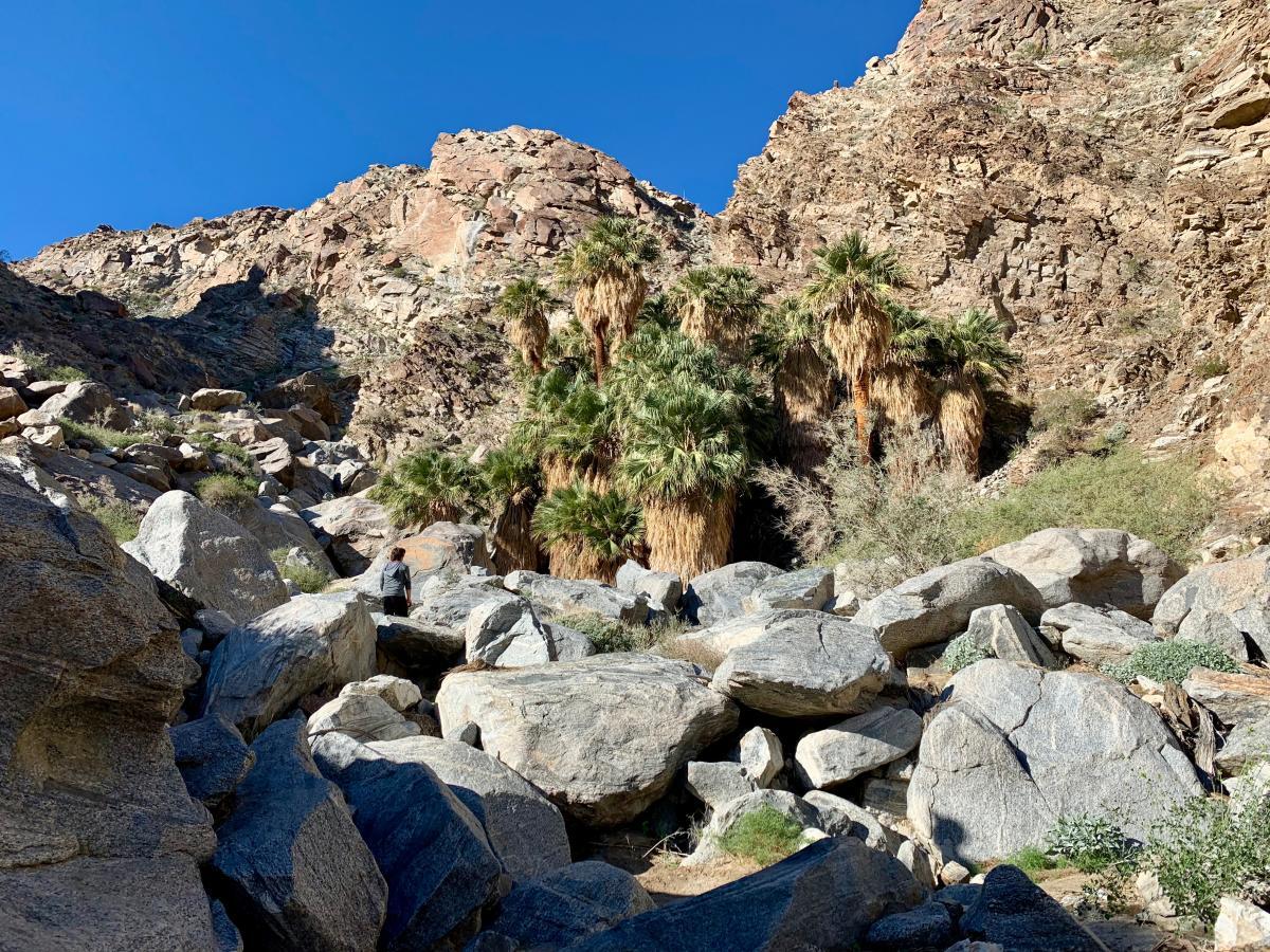art smith trail oasis, easy hikes
