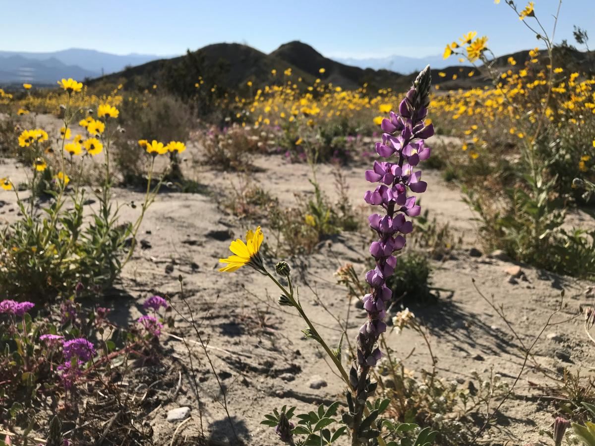 Yellow and purple flowers in a meadow at Metate Ranch.