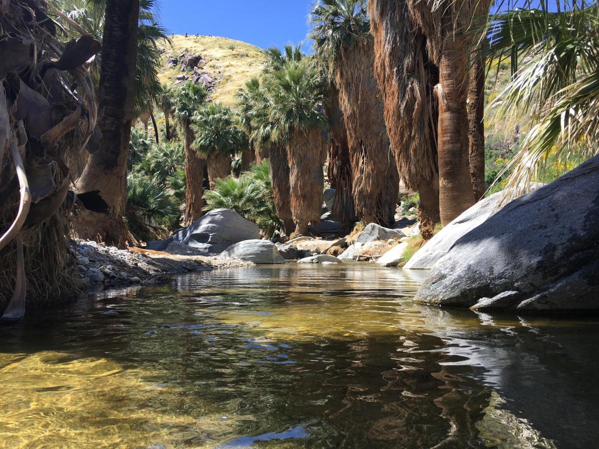 Palm Canyon at Indian Canyons