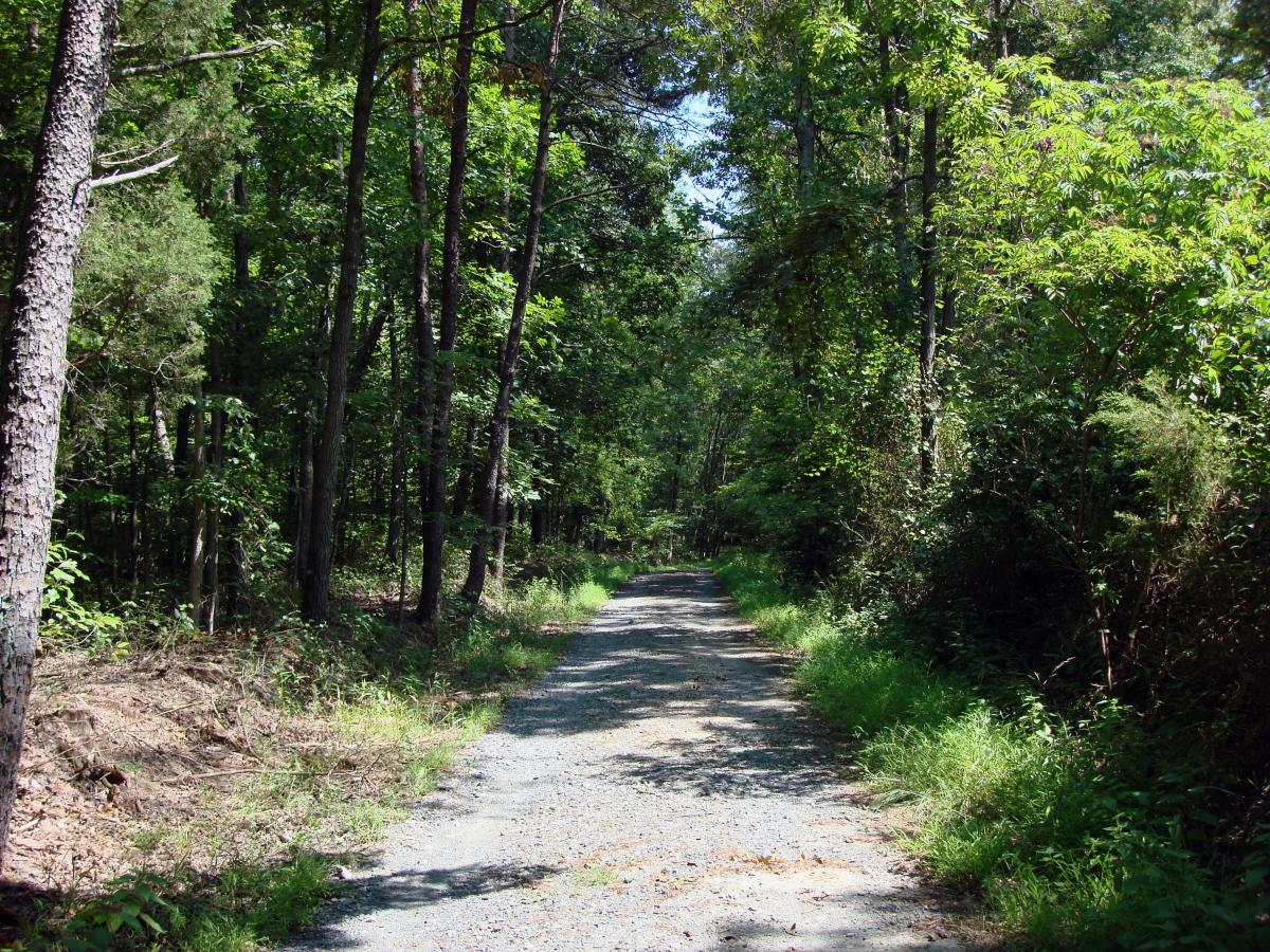 Pyrite Mine Road trail during spring at Prince William Forest Park