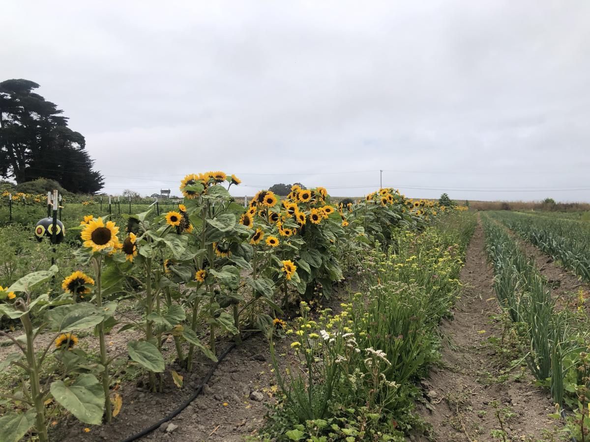 fields-at-brisa-de-ano-farm