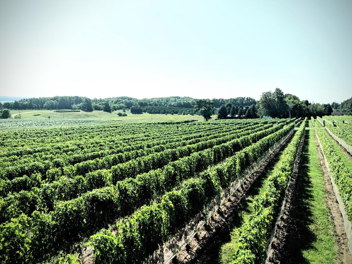 Brys Estate Vineyard