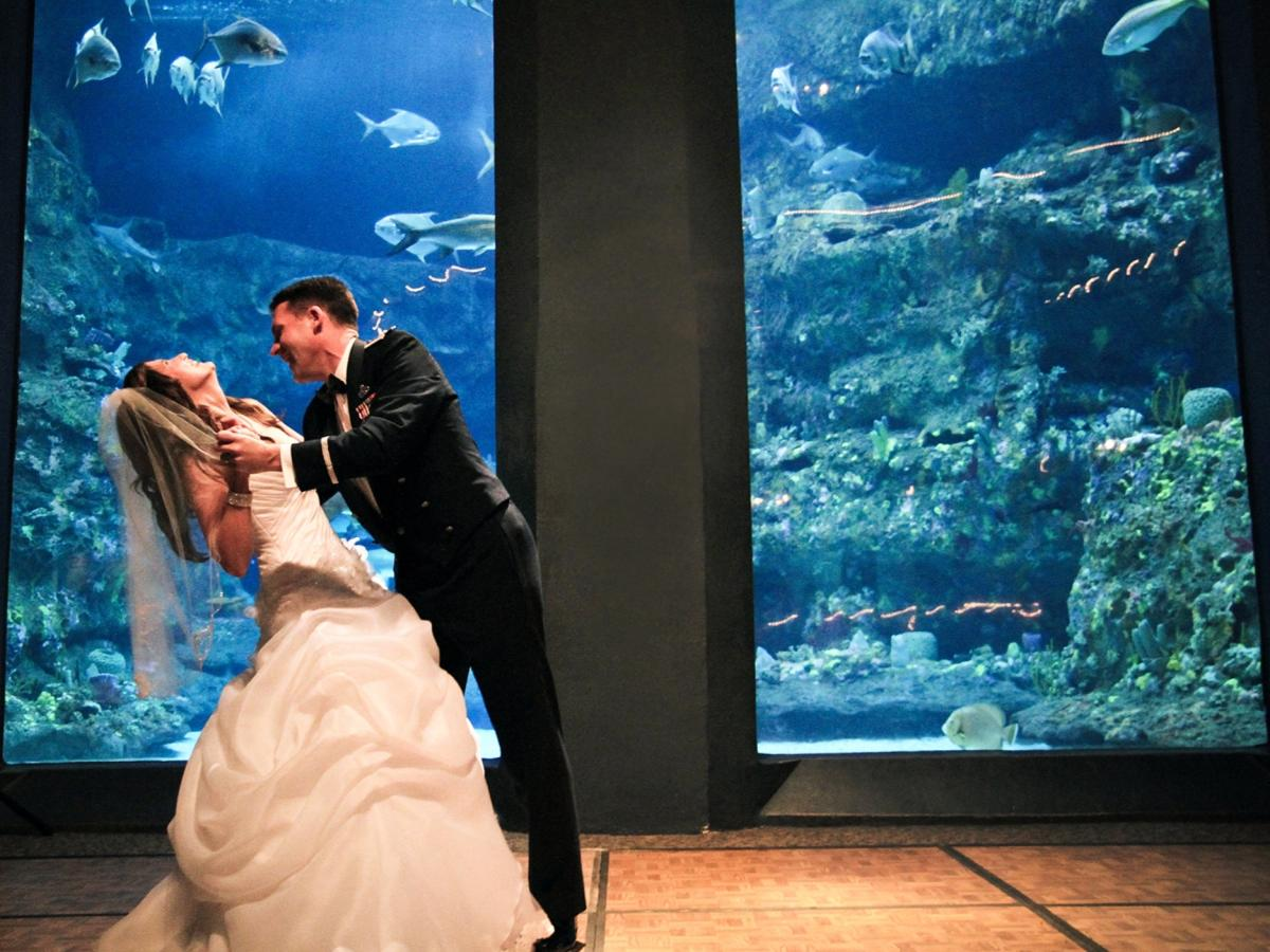 Aquarium Trendy Bride & Groom