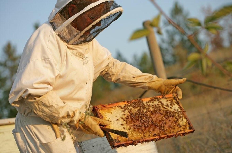 Arlo's Honey Farm Image