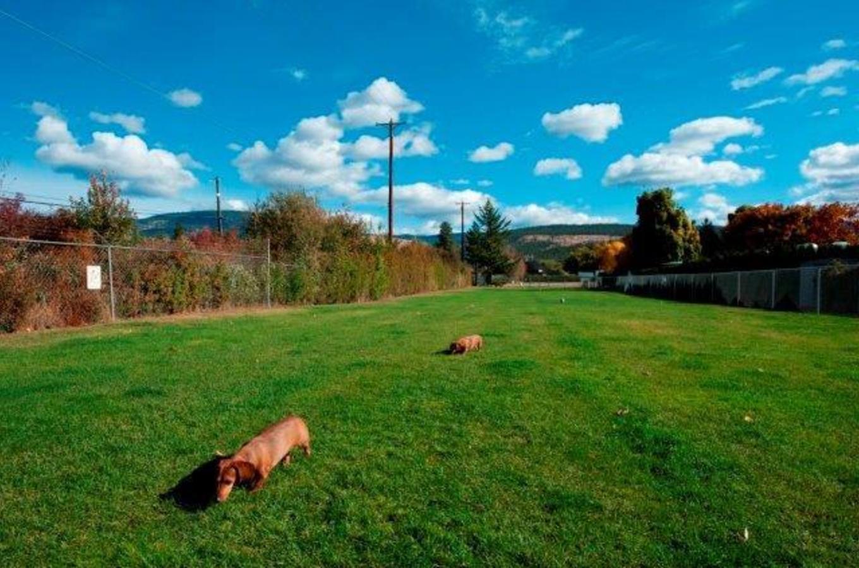 Holiday Park Resort Fenced Off-leash Dog Park