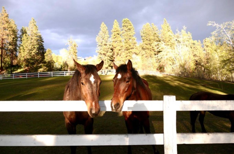 Image 1 - Horses