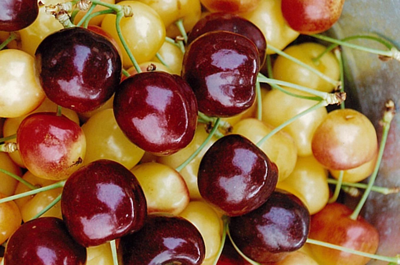 Kempf Orchard Image