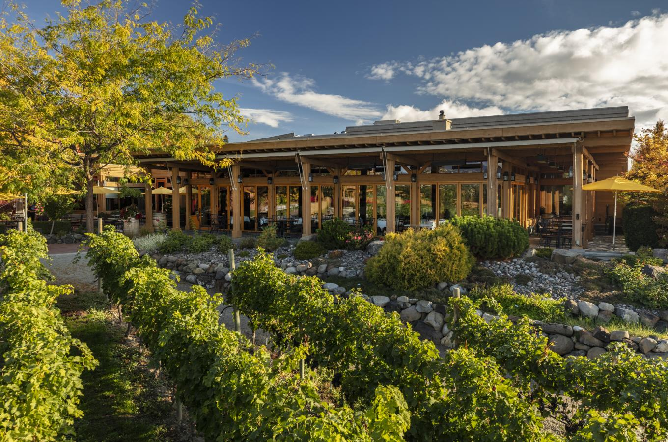 Summer at Old Vines Restaurant