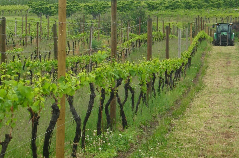 Sperling Vineyard