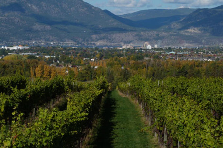 sperling-vineyards.jpg