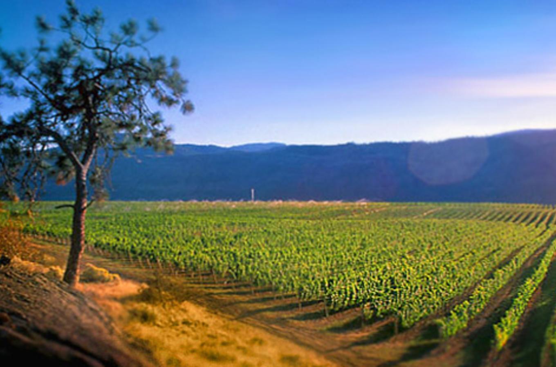 Sumac-Winery.jpg