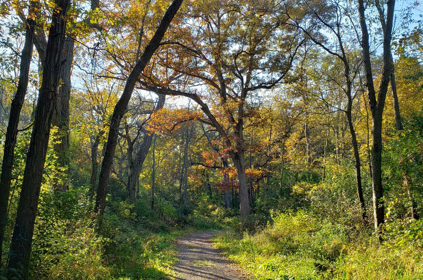 Hackbarth Trail in fall