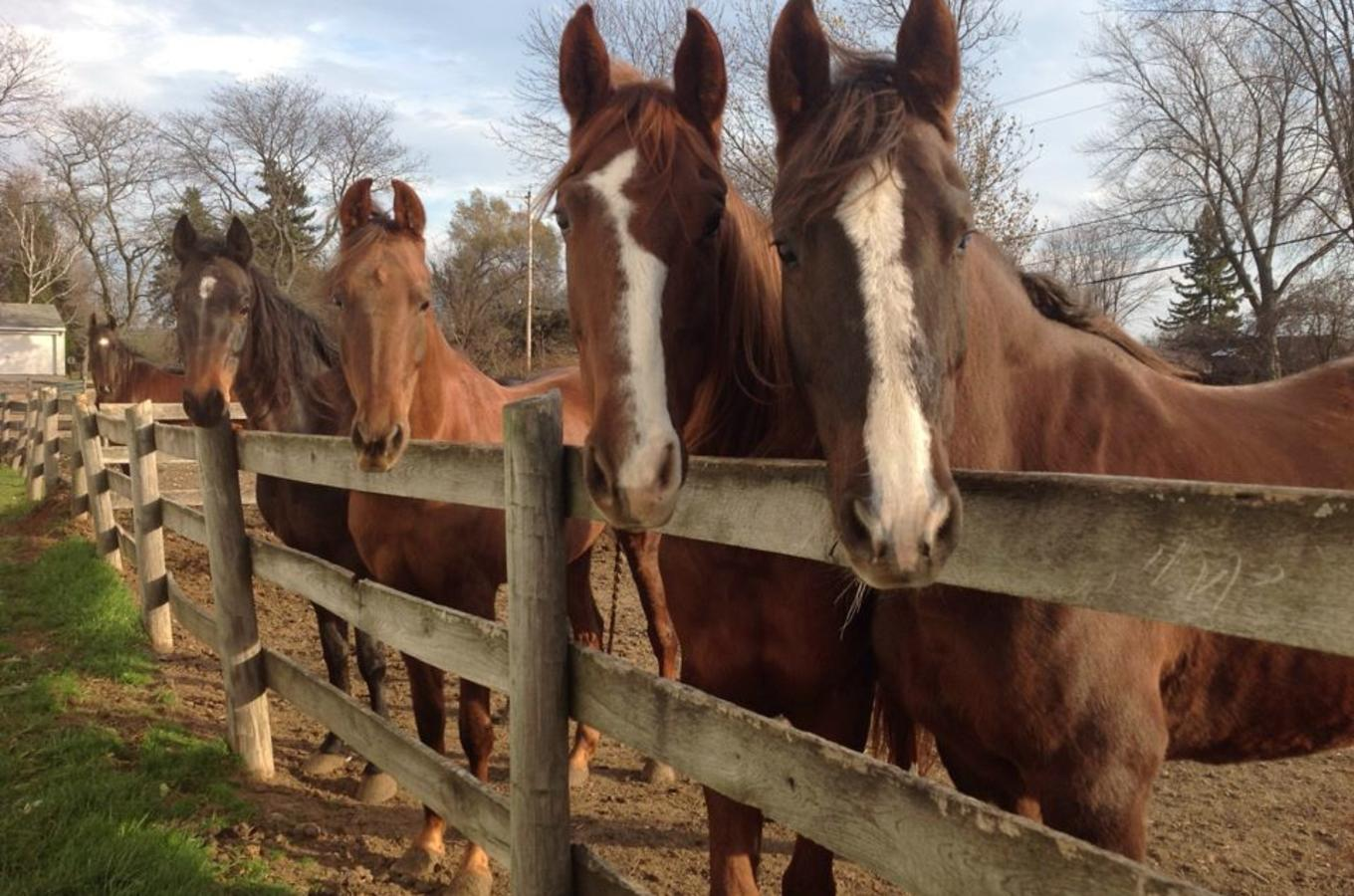 Horses of Applewood Farms