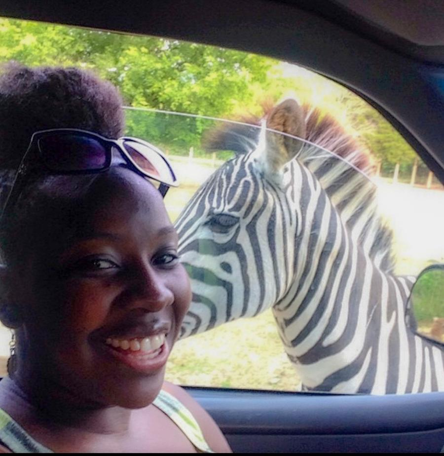 Woman In Car With Zebra In The Window