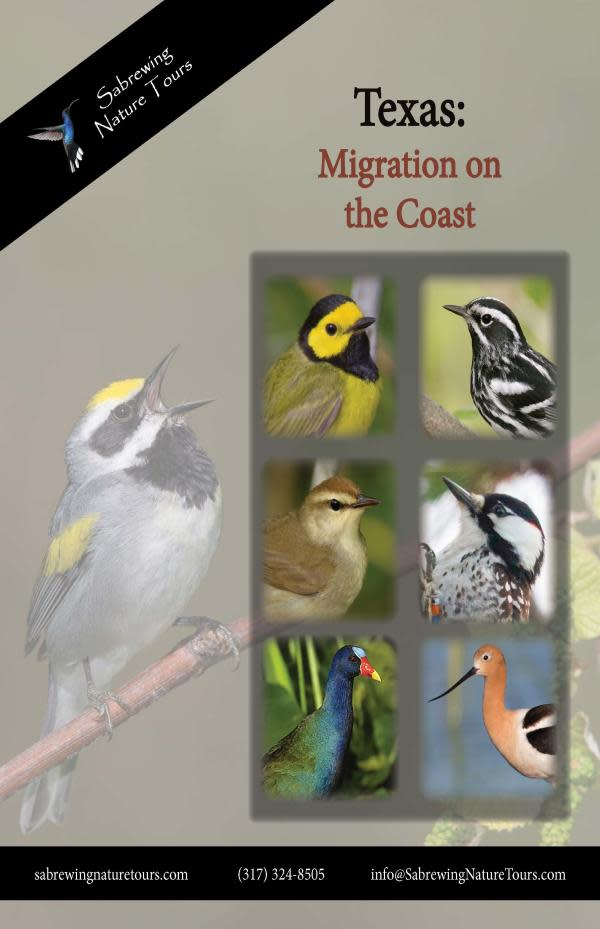 Texas Upper Coast Birding Trip Flyer
