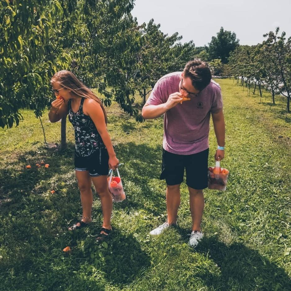 Peach Picking Apple Holler