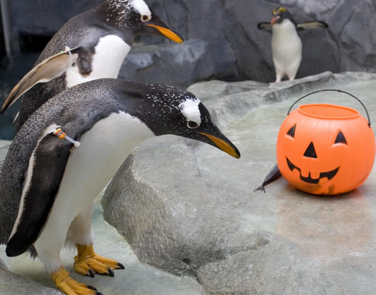 Fall_Tennessee Aquarium Aquascarium 2