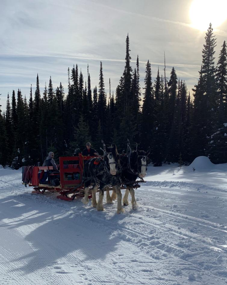 Horse Sleigh at Big White