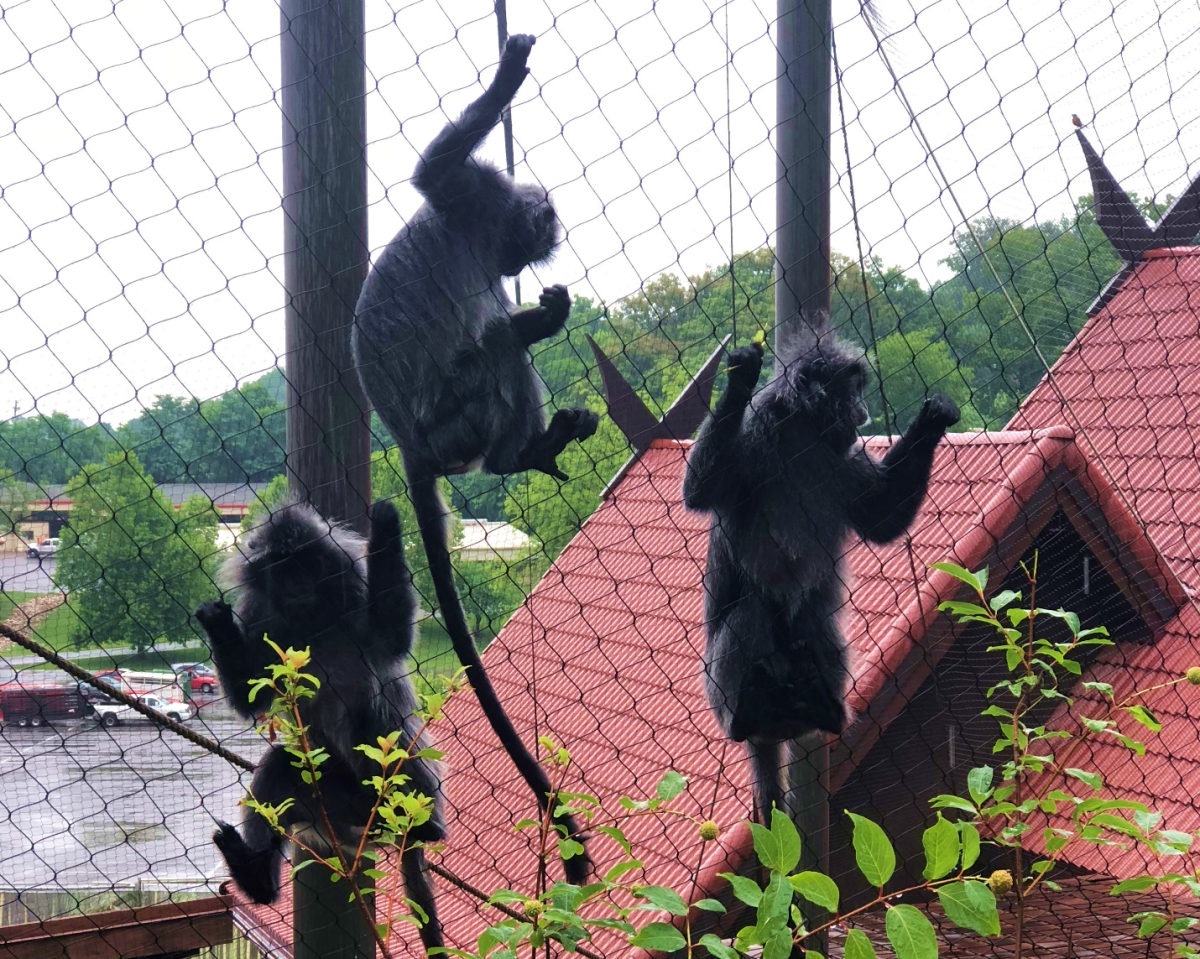 Monkeys Zoo Knoxville