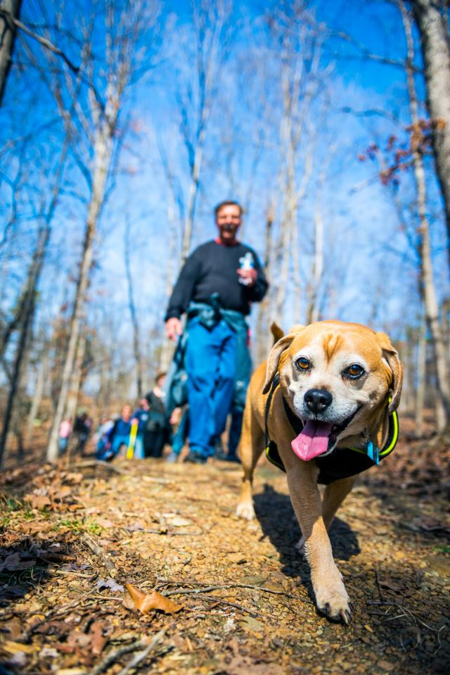 Dog Hiking - Grassy Hill - Franklin County VA