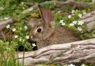 That rabbit's dynamite!