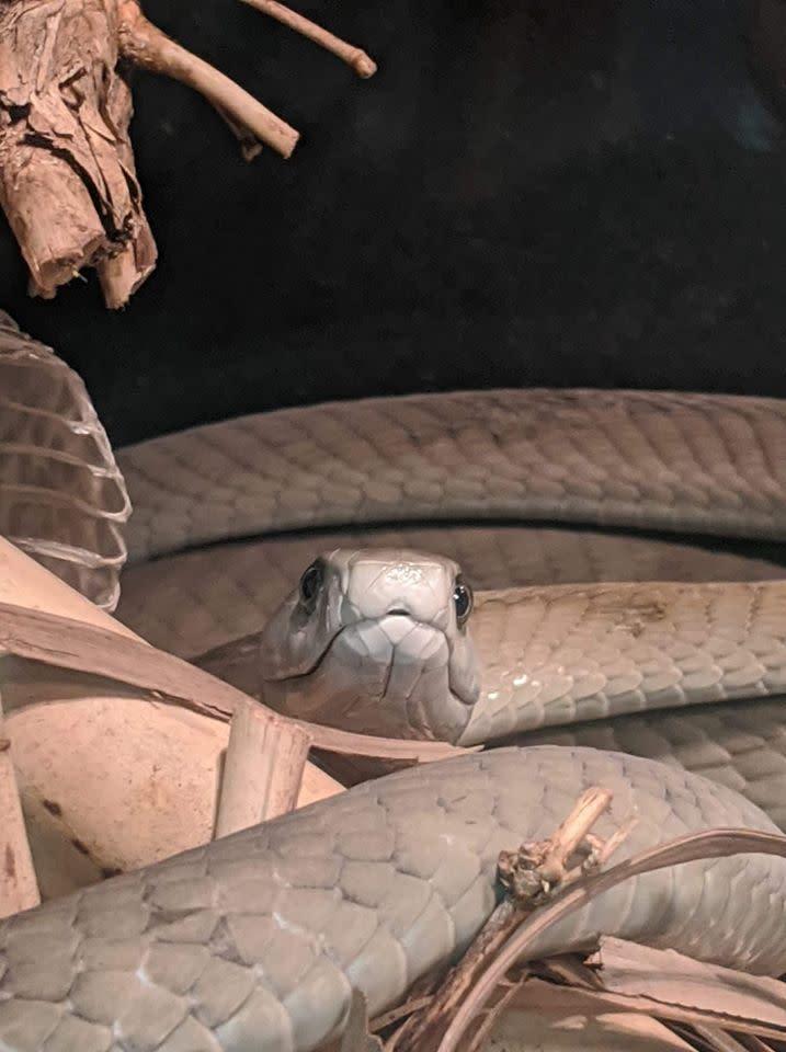 Snake at MToxins