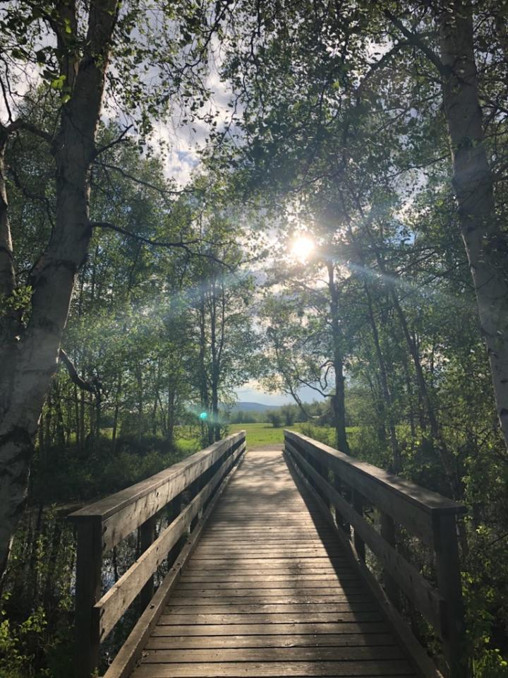 A wooden foot bridge through a sunlit birch tree forest