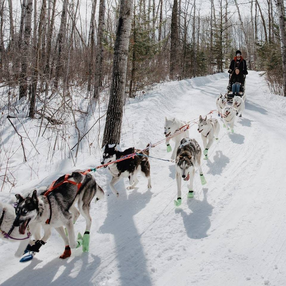 Harness Adventure Mushing Co