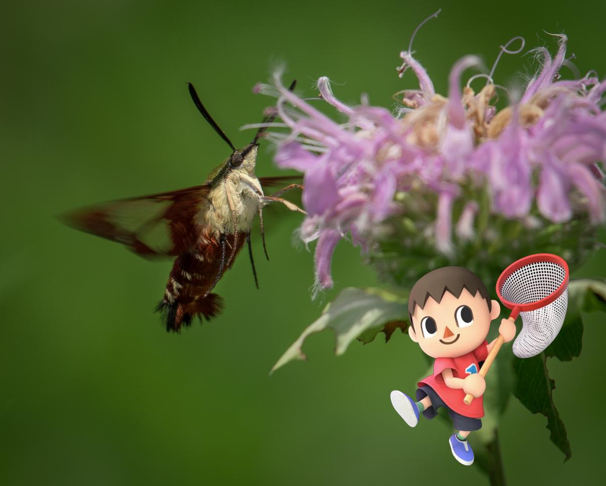 Animal Crossing Bugs