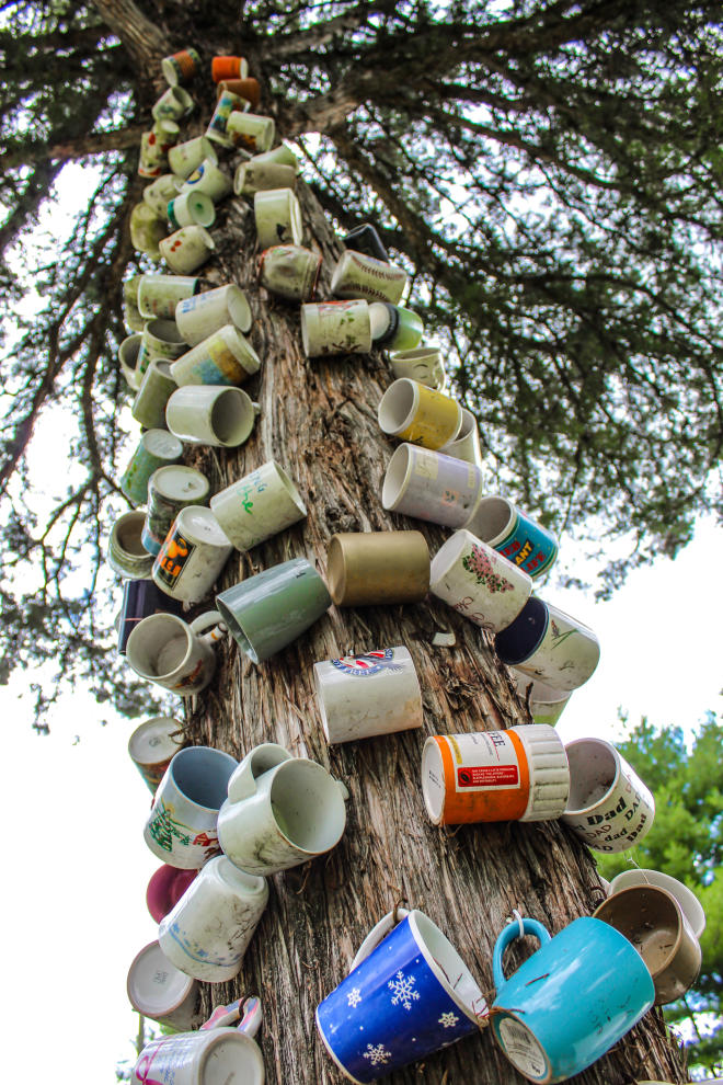 Coffee Cup Tree - Route 311 - Craig County, Virginia