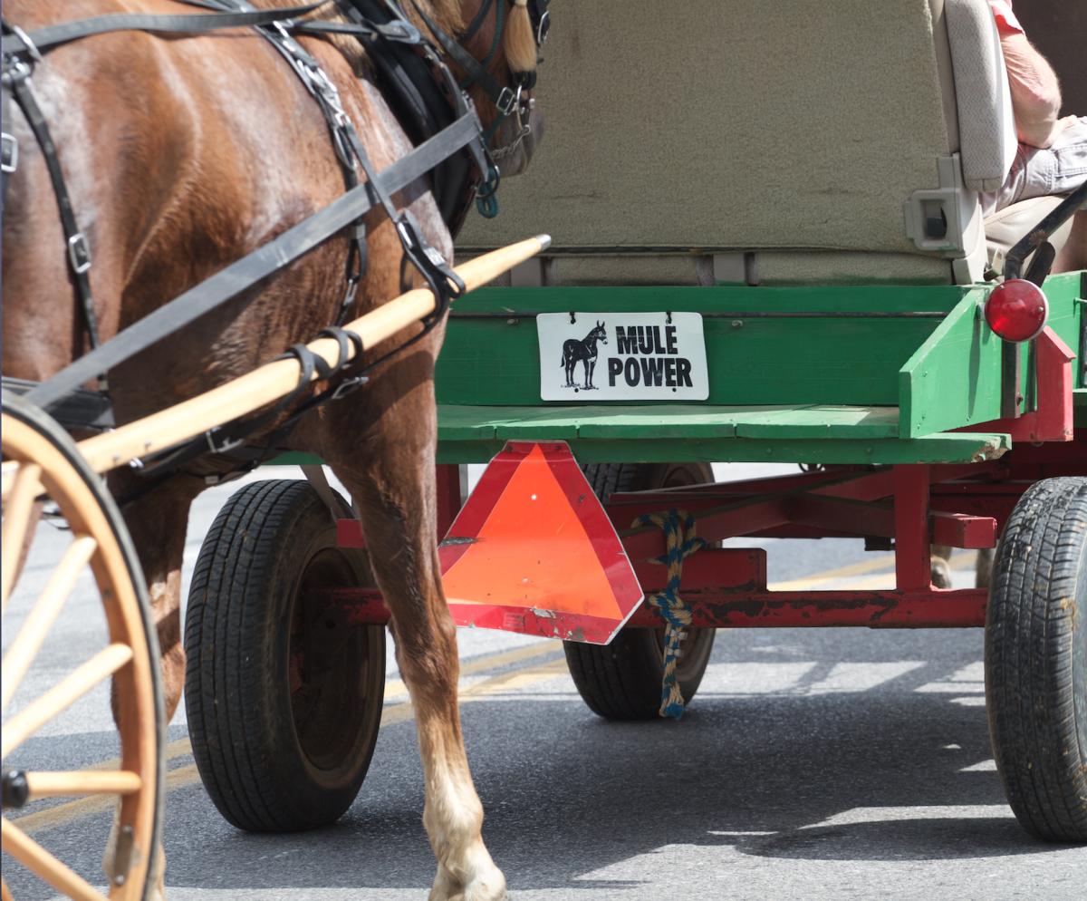 Winfield's Mule Day