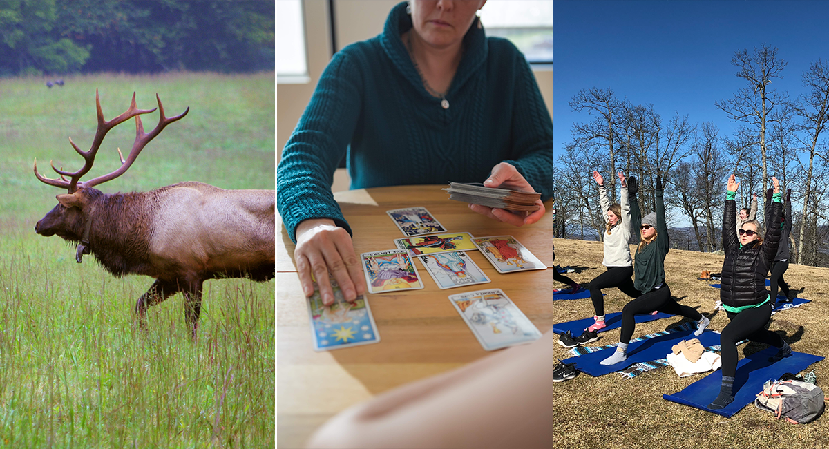 What's New 2020 - Hikes in Cataloochee Valley, Tarot Readings, Yoga Hikes