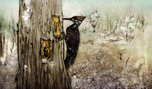 Pileated Woodpecker Illustration by Holly N. Wright