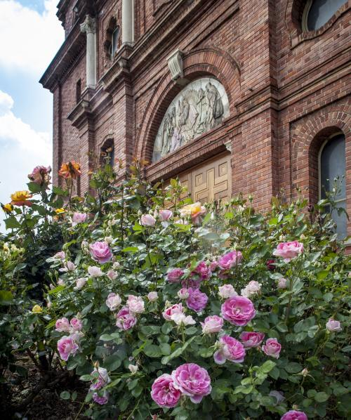 Basilica of St. Lawrence Roses