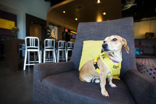 Pet Friendly Finds: Aloft 2