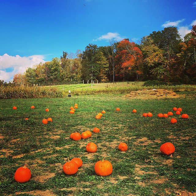 Hickory Nut Gap Farm Mid Fall 2016