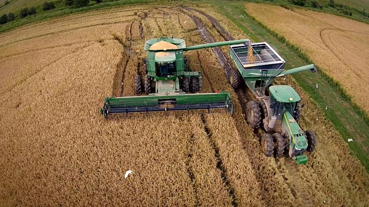 rice crop at sweet lake land and oil