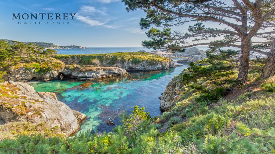 Point Lobos, Carmel, CA Zoom Background