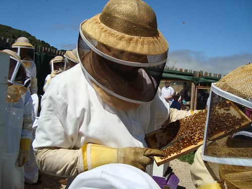 John Russo describes the complex world of honey bees