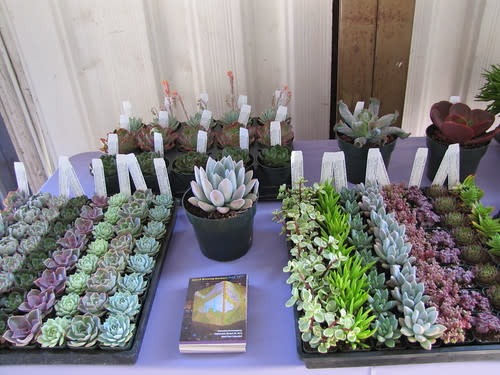Succulent display at the Monterey Bay Greenhouse Growers Open House