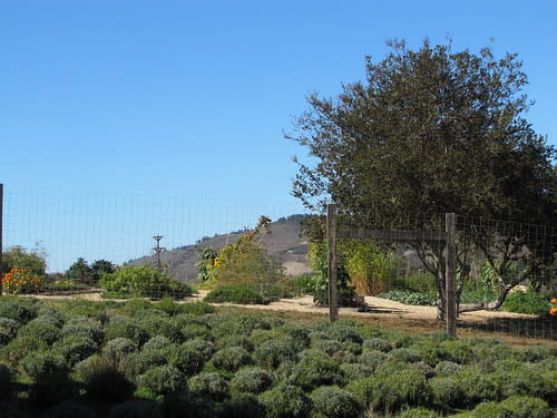 The Organic Garden at Carmel Valley Ranch
