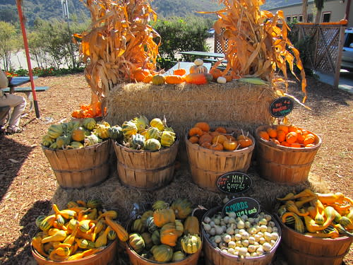 Harvest Time at Earthbound Farms
