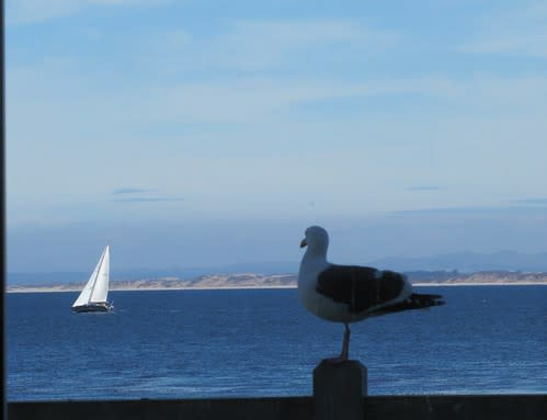 Even the seagull is enjoying the view at The C restaurant + bar