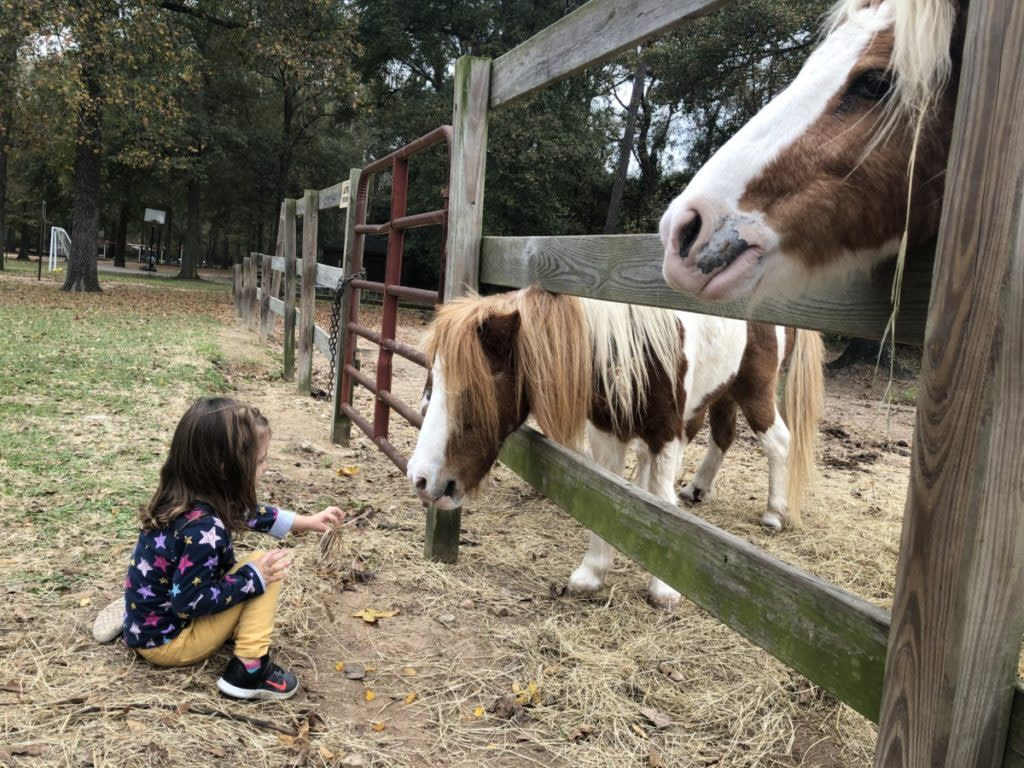 A toddler feeds a small horse at 7 Acre Wood in Conroe