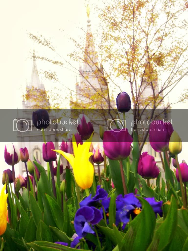 flowers,tulips,salt lake temple,flowers at temple square