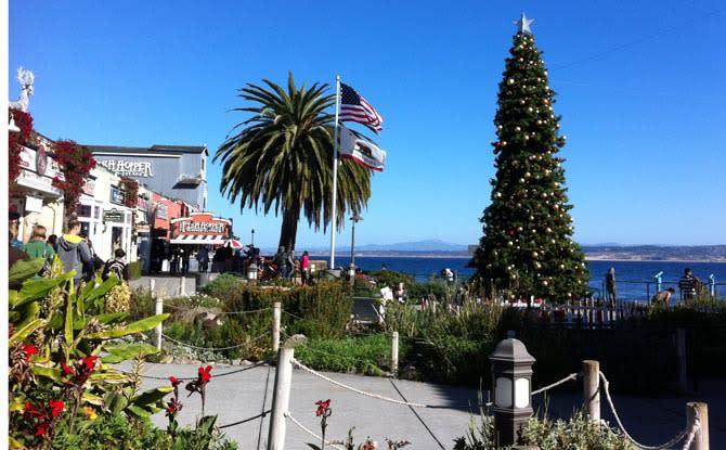 Cannery Row Tree Lighting