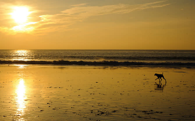 Dog on Carmel Beach
